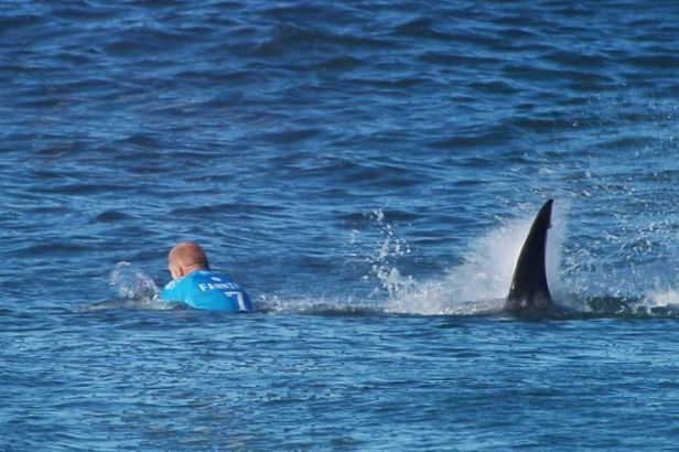 Mick Fanning about to punch on with a Great White