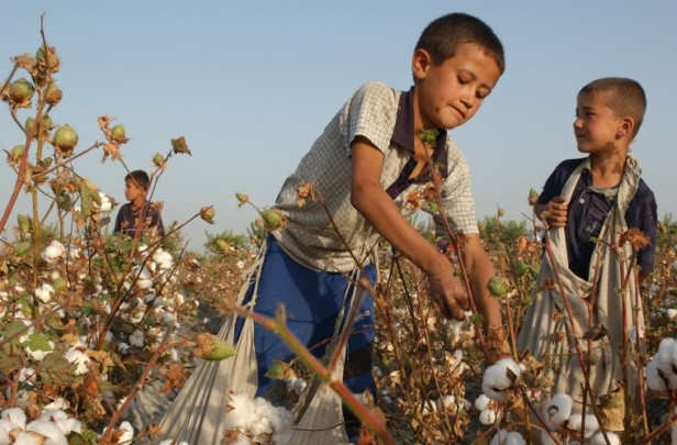 The 'Cotton Campaign' has exposed the plight of child labour in countries like Uzbekistan